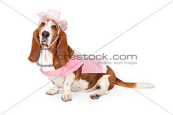 Basset Hound Dog Wearing a Pink Cowboy Outfit