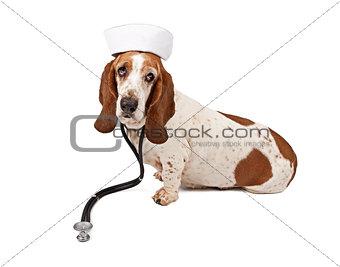 Basset Hound Nurse