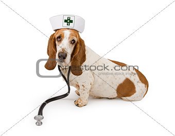 Basset Hound Dog Nurse With A Vet Cross On Hat