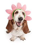 Basset Hound Dog Wearing a Flower Head Band