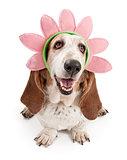 Basset Hound Dog Wearing a Flower Head Band
