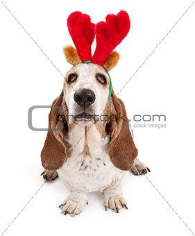 Basset Hound Dog Wearing Reindeer Antlers