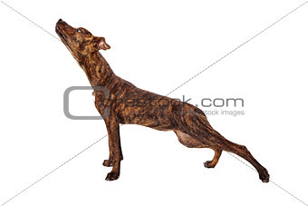 Brindle mixed breed dog stretching