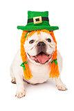 Bulldog Wearing Irish Hat and Hair Braids