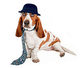 Basset Hound Businessman