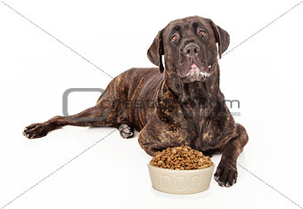 Cane Corso Dog With Bowl of Food