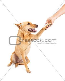 Carolina Dog Paw Shake