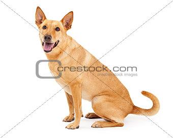 Carolina Dog Sitting Profile