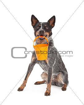 Cattle Dog Holding Orange Bucket