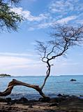 Gnarled Tree on Beach