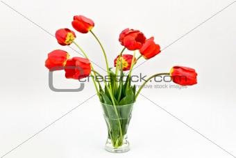 bouquet of tulip