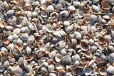 Seashell backgrounds