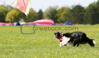 Kite Hunter