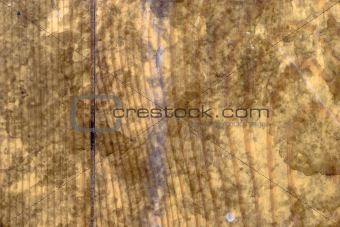 Fragment of textured old wood