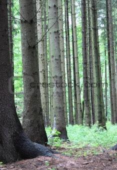 czech forest