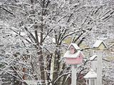 Snow covered Bird houses