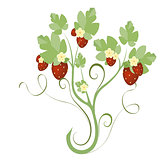 strawberry plant with flowers