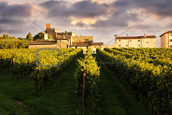 beautiful landscape with vineyards