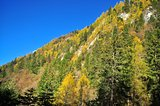 Trees with colourful leaves on a mountain