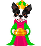The Boston terrier as a Biblical Magi