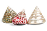 colorful sea shells on white background