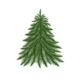 Fir tree isolated on white.