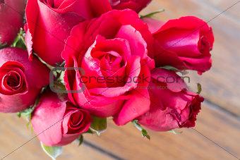 Beautiful red rose up close