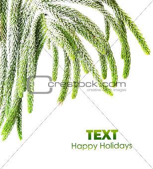 Beautiful green fir border