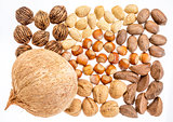 variety of nuts in shells