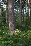Beautiful lush vibrant forest landscape in Summer