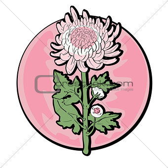 chrysanthemum clip art