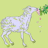 sheep eating flowers