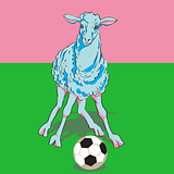 sheep playing football