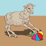sheep playing the ball