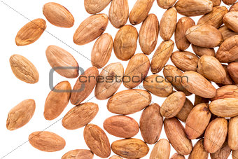 cacao beans on white background