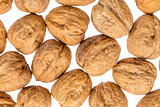 English walnuts on white background