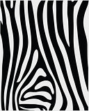skin of zebra 2