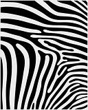 skin of zebra