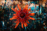 Grungy Orange Flower