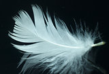 White, delicate feather.