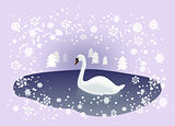 Swan in Winter Landscape
