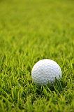 Dirty golf ball on the grass