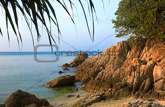 Tree and sea on Koh Phangan