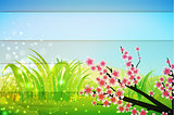 spring bg