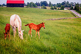 Mother horse wit two colts