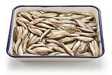 honmoroko, japanese willow shiner, luxury freshwater fish