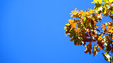 Colorful autimn leaves agaist blue sky