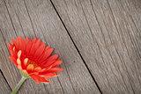 Orange gerbera flower on wooden background