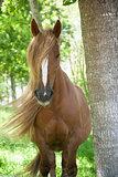 long hairhorse