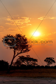 African sunset with tree in front